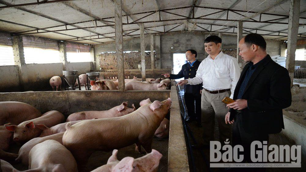 Phòng, chống bệnh dịch tả lợn châu Phi: Huy động tối đa  cán bộ thú y cơ sở tham gia