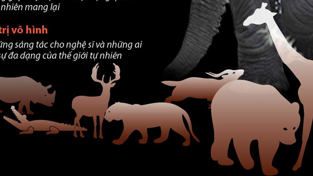 Vì sao cần bảo vệ động vật hoang dã?
