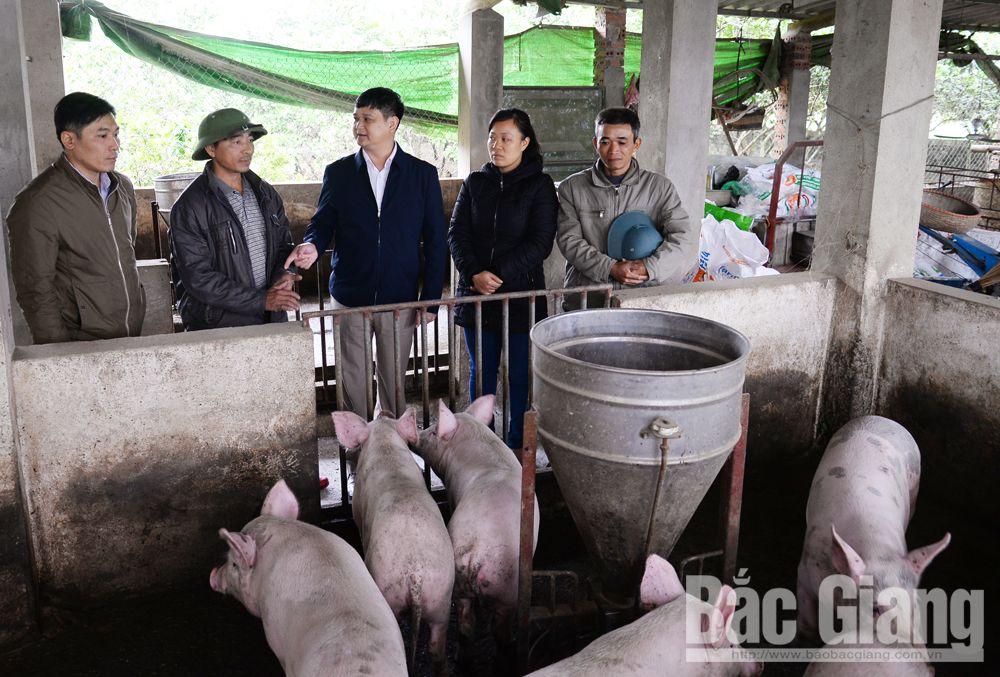 Đoàn công tác của Sở Nông nghiệp và PTNT kiểm tra công tác phòng, chống bệnh DTLCP tại một hộ chăn nuôi ở thôn Bình Dương, xã Ngọc Sơn (Hiệp Hòa).