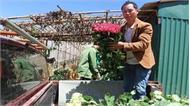 Giá hoa hồng tăng cao kỷ lục trước lễ 8-3