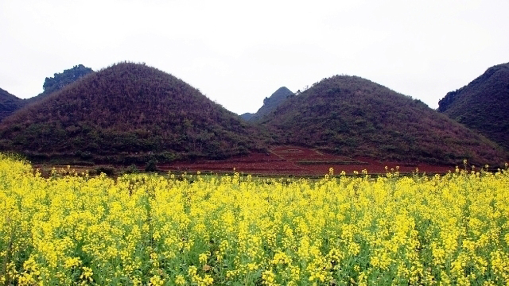 Spring Flowers on Dong Van Plateau