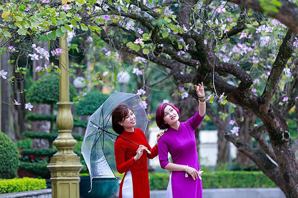 300 cây hoa ban, núi rừng Tây Bắc, Bảo tàng Hà Nội