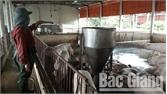 Xã Xuân Hương (Lạng  Giang): Thực hiện nhiều biện pháp phòng bệnh dịch tả lợn châu Phi
