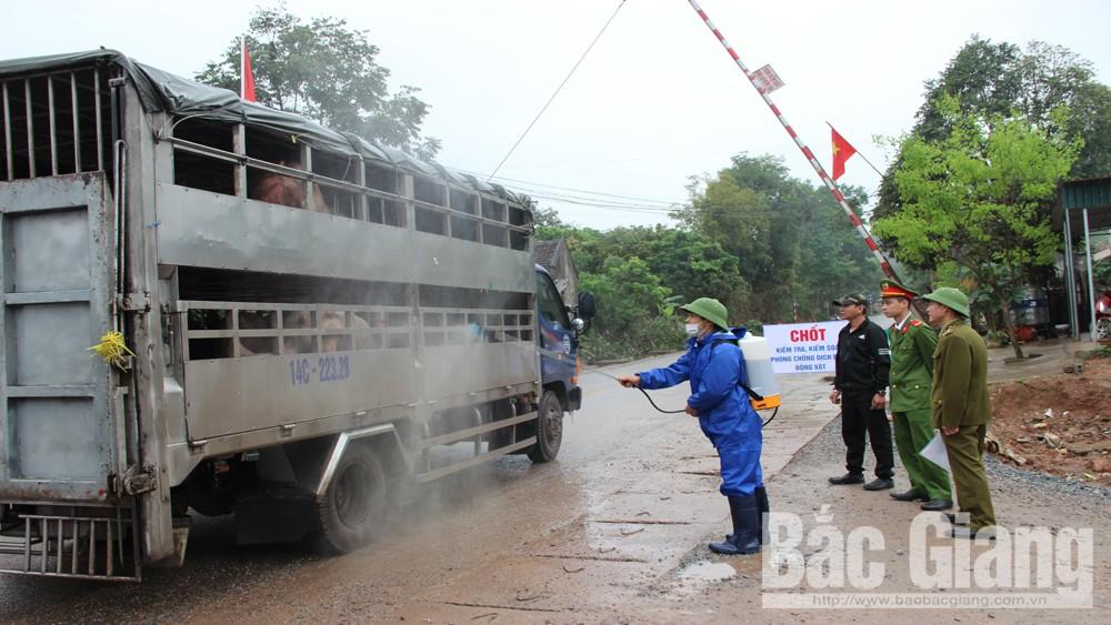 Một chiếc xe tải chở lợn đi qua chốt kiểm soát trên đèo Hạ My, xã Long Sơn được phun hóa chất khử trùng.
