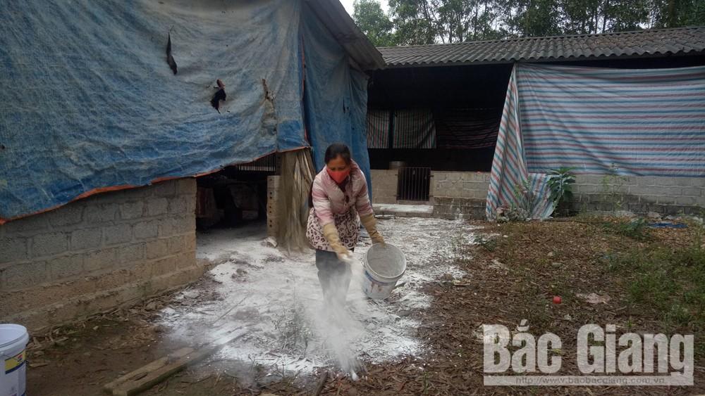 Chị Nguyễn Thị Nghĩa ở thị trấn An Châu thực hiện rắc vôi bột, vệ sinh chuồng trại chăn nuôi, phòng chống dịch tả lợn châu Phi.