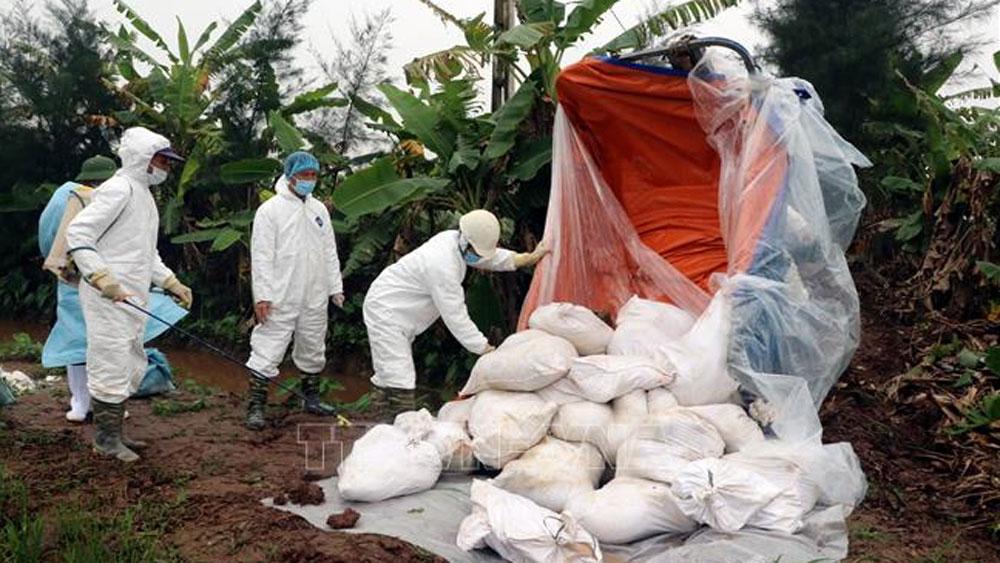 Lực lượng chức năng tỉnh Nam Định vận chuyển lợn mắc bệnh đi tiêu hủy.