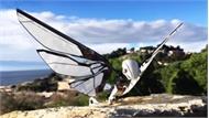 Robot bay bắt chước chuyển động của chim và côn trùng