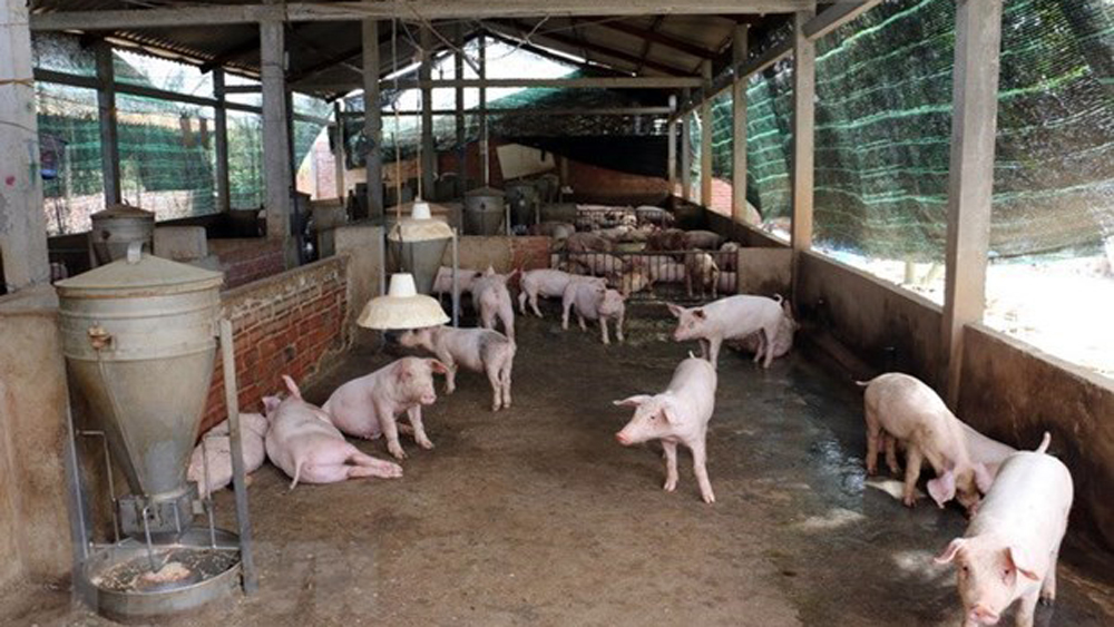 FAO, OIE support Vietnam in tackling African swine fever outbreaks