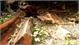 Phát hiện vụ phá rừng nghiêm trọng ở Vườn Quốc gia Phong Nha - Kẻ Bàng