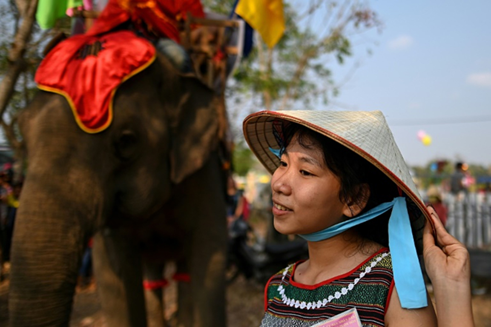 Fast and furious, Vietnam's elephant race, cheers and critics, long-standing tradition, animal activists , Y Hoi