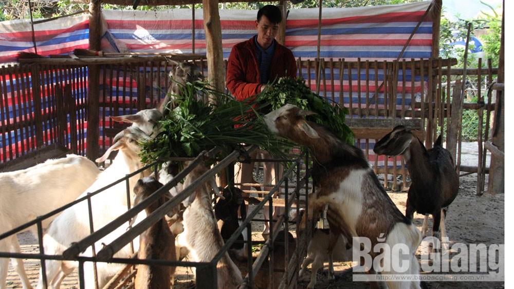 Lục Ngạn hỗ trợ 53 dự án sản xuất cho hội viên nông dân