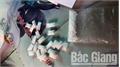 Bắc Giang: Bắt hai đối tượng tàng trữ trái phép nhiều loại ma túy