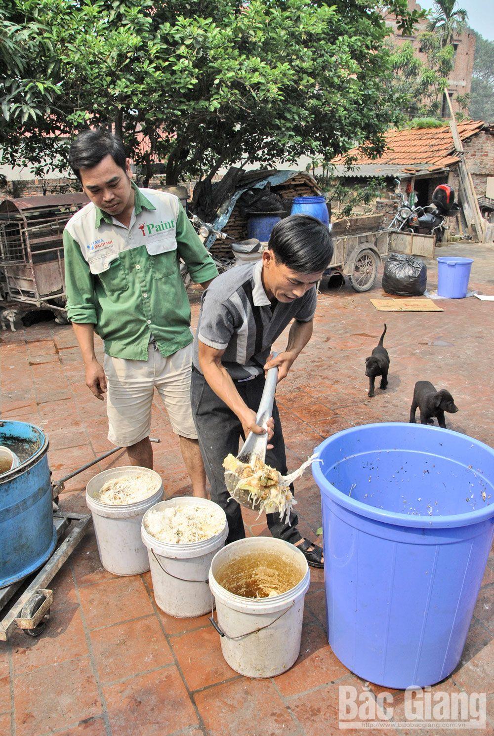 bệnh dịch tả lợn châu Phi, nuôi lợn, chăn nuôi, lợn tả, Bắc Giang
