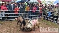 Đông đảo người dân, du khách cổ vũ giải chọi dê tại Lễ hội Yên Thế
