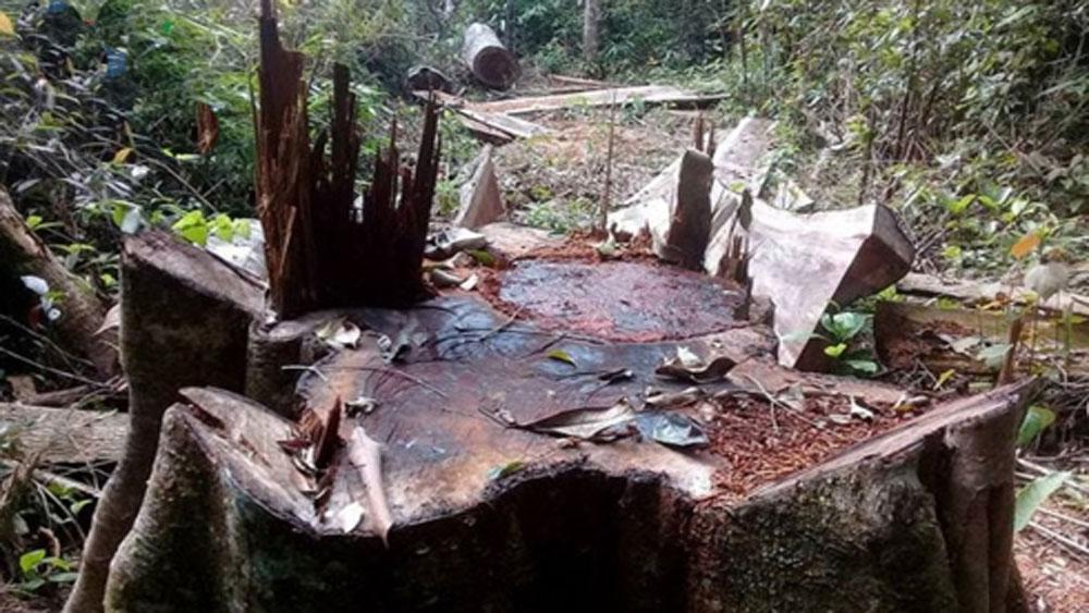 Gia Lai: Khởi tố, bắt giam 5 đối tượng khai thác gỗ rừng trái phép