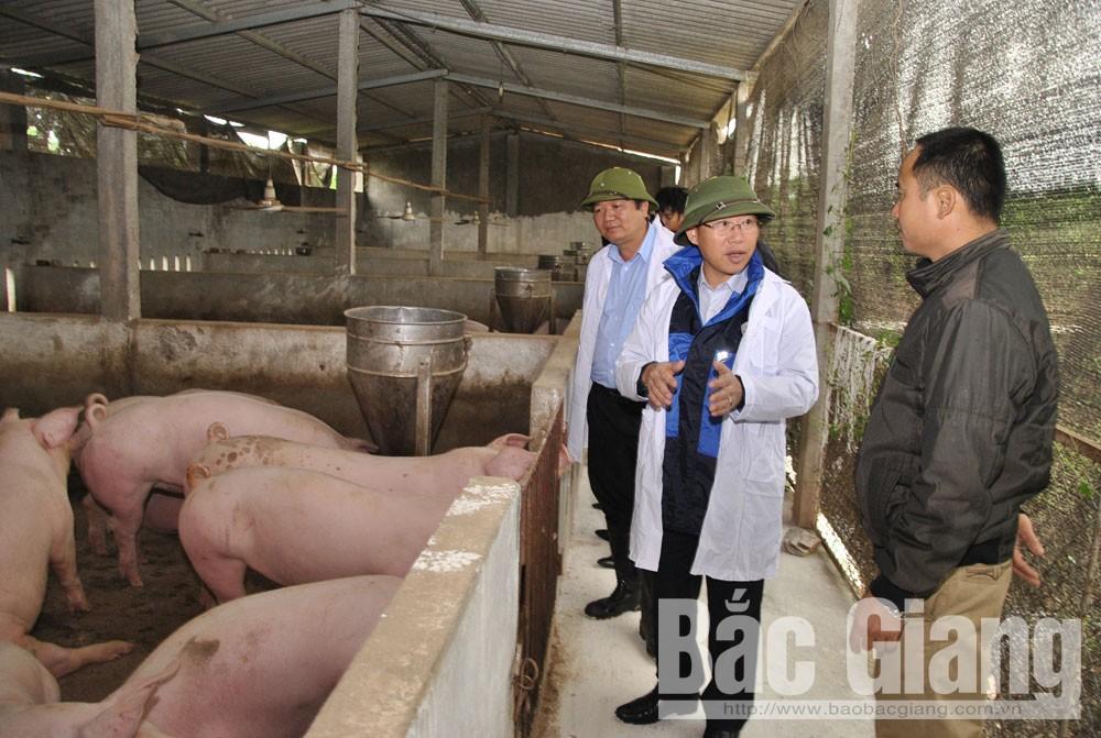 bảo vệ, Lục Ngạn, an toàn, bệnh dịch, bệnh dịch tả lợn châu phi, Thế đại