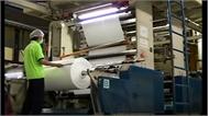 Túi nylon làm từ sắn có thể phân hủy trong 6 tuần