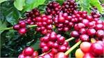 Vietnam attends international coffee, tea expo in Singapore