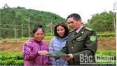 Sơn Động bảo đảm chất lượng giống cây lâm nghiệp