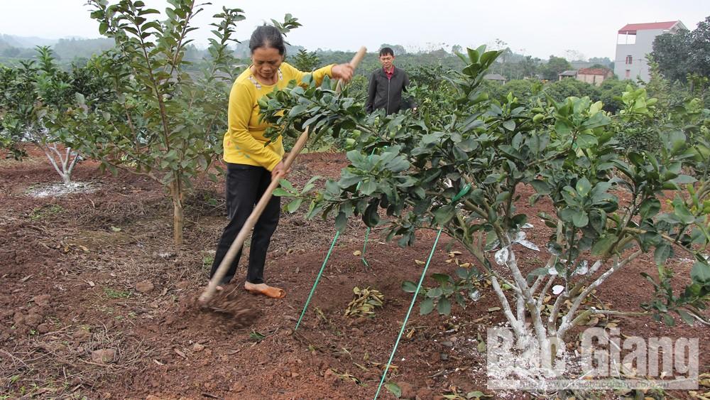 Hơn 1,5 tỷ đồng giúp hội viên nông dân thoát nghèo