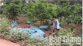Lục Ngạn (Bắc Giang): Nghiêm cấm mua bán, vận chuyển trái phép phân chuồng