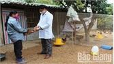 Yên Thế tập trung phòng chống dịch bệnh trên đàn vật nuôi