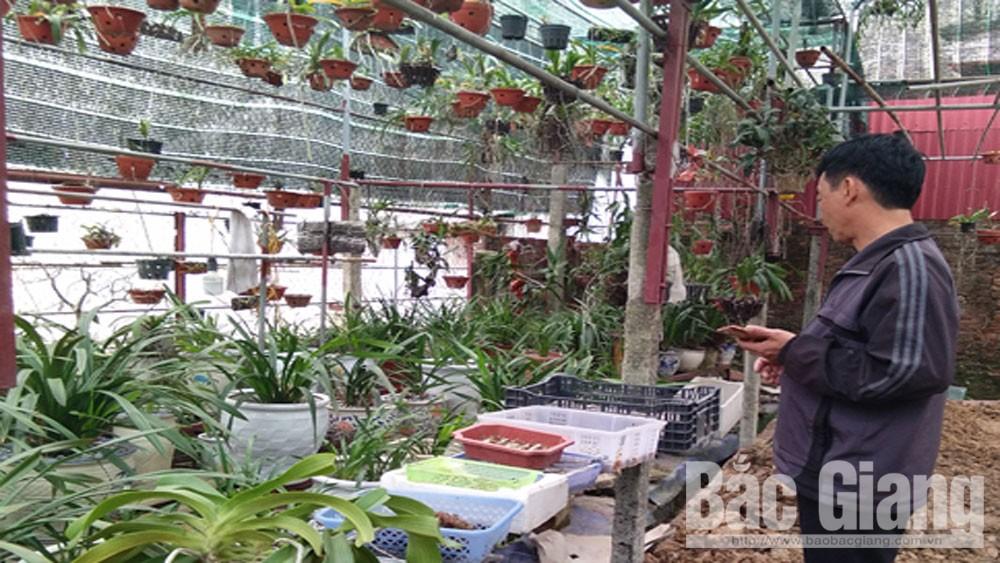 Người đưa lan rừng về phố, Nguyễn Hồng Thiệu, TP Bắc Giang, tỉnh Bắc Giang, phong lan