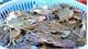 Trộm cắp hải sản
