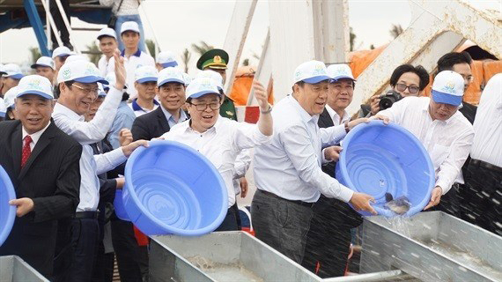 Efforts made to restore aquatic resources in Gulf of Tonkin