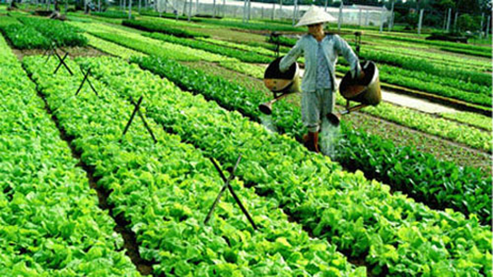 Trung Thinh, Bac Giang province, Agricultural Production and Service Cooperative, VietGAP certificate, Globalcert, economic value