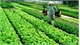 Trung Thinh Agricultural Production and Service Cooperative granted with VietGAP certificate