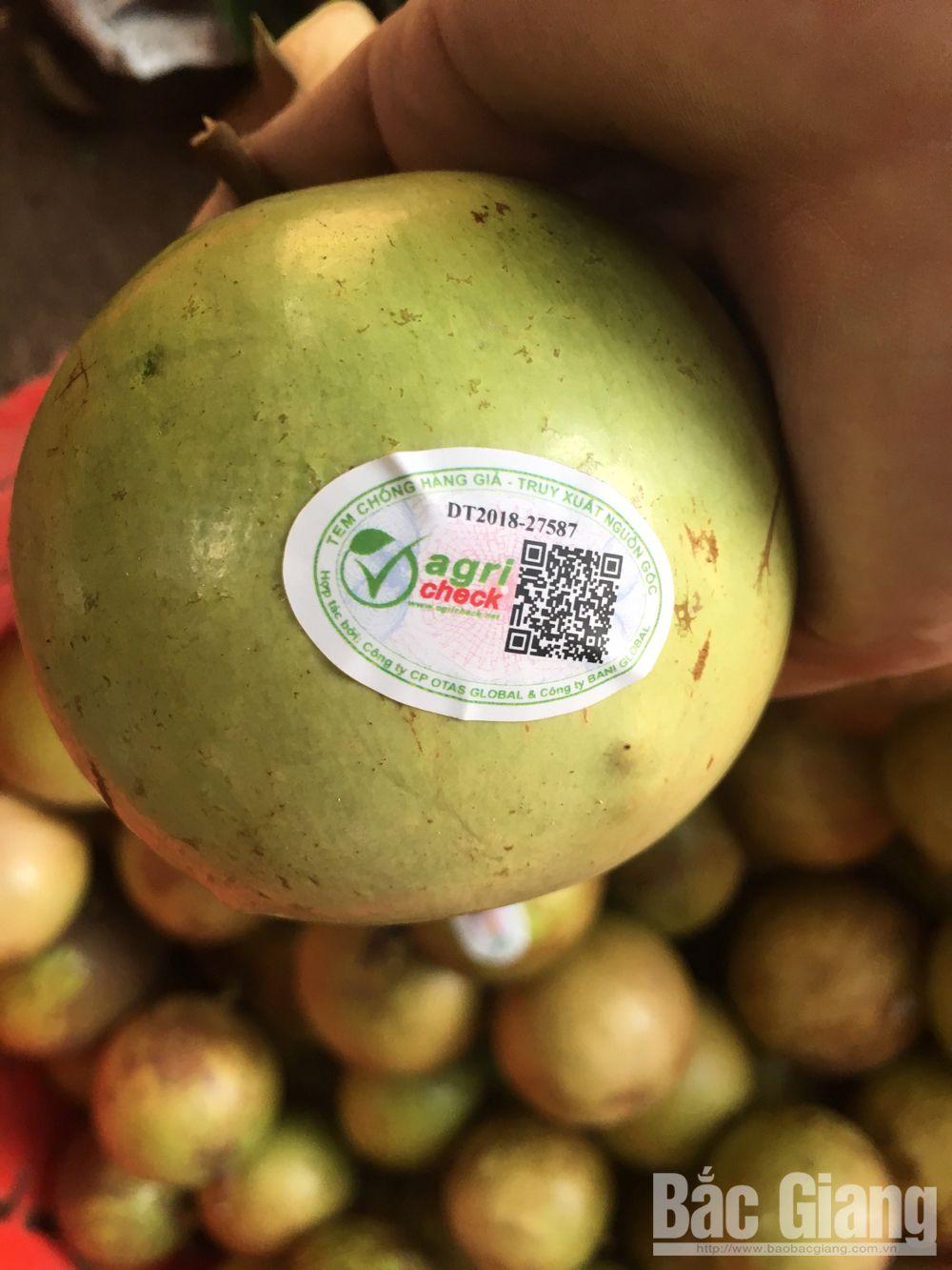 Tan Yen district,  Bac Giang province, farm produce, origin traceability,  brand protection,  consumption market,