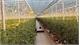 Công nghệ giúp Hà Lan xuất khẩu thực phẩm hàng đầu thế giới