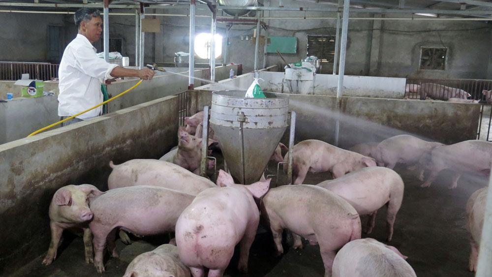 Ninh Bình, huyện Hoa Lư, công bố, dịch tả lợn châu Phi