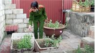 Nghi phạm bán ma túy, trồng thuốc phiện trên nóc nhà