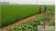 Sau dồn điền đổi thửa: Hàng nghìn ha đất chậm được cấp sổ đỏ