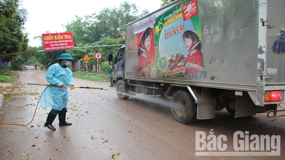 Phòng, chống bệnh dịch tả lợn châu Phi ở Tân Yên:  Kiểm soát chặt tại cơ sở
