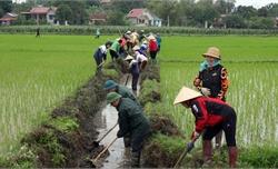 Ngày Chủ nhật lao động cùng nông dân