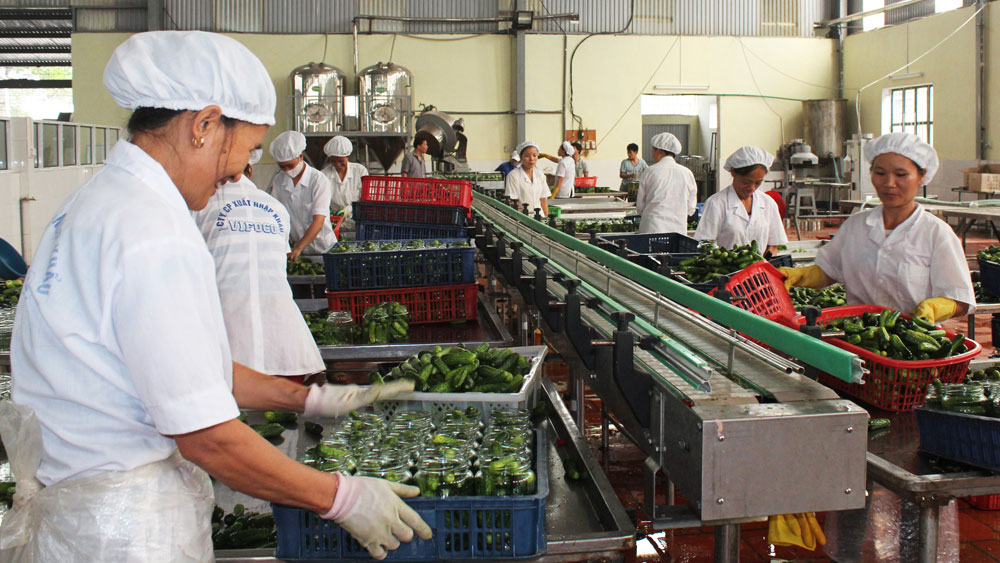 Bac Giang province, farm produce, China market, export condition, smooth product consumption, origin traceability, code of cultivation area