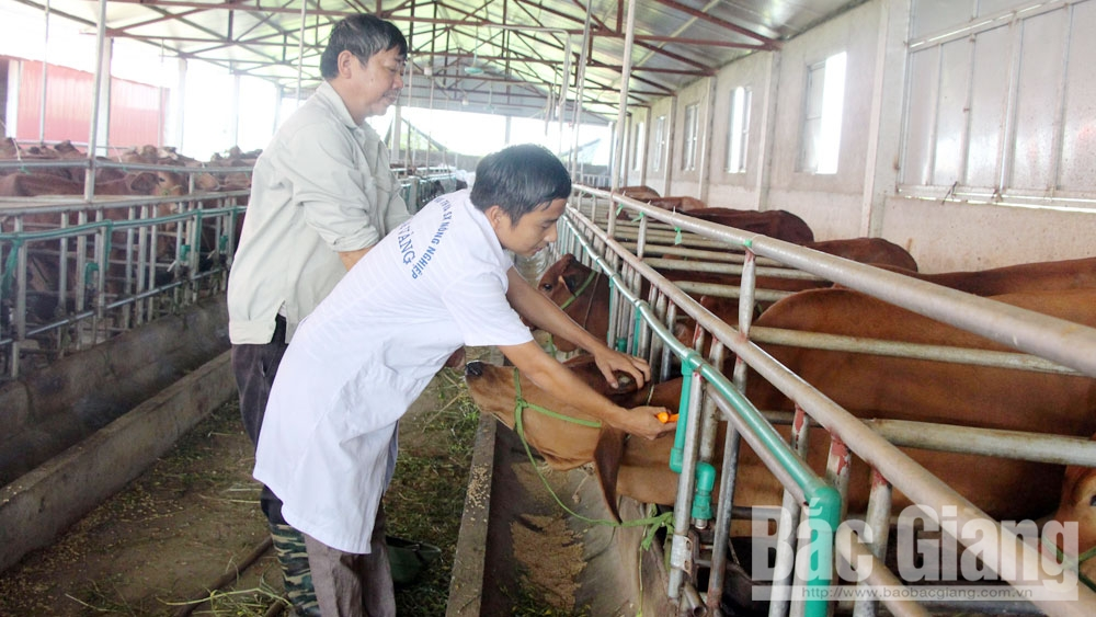 BHXH, BHYT, hợp tác xã, tỉnh Bắc Giang, người lao động, ngành chức năng