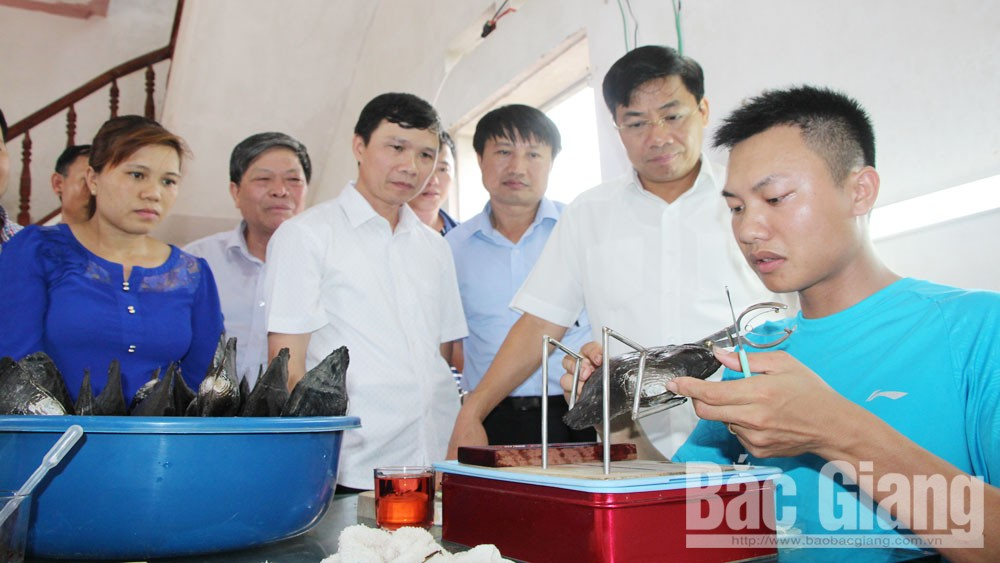 Bac Giang's agriculture targets to top northern area by 2030