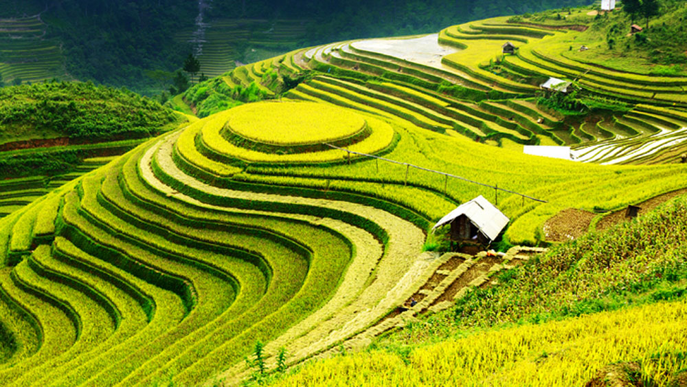 Northern highland, rice terraces, Vietnam, world's most colorful places, Yen Bai Province, rice paddies, famous tourist destinations
