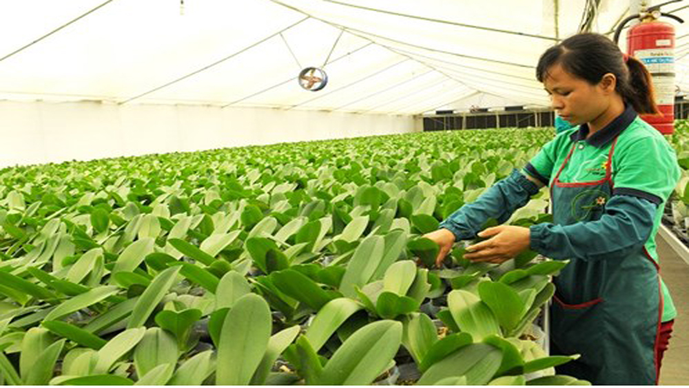 Hanoi helps bring farmers into 21st century with technology