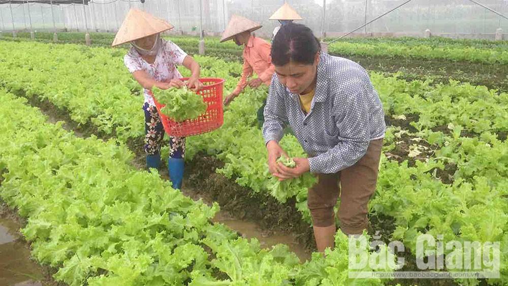 Tân Yên, nông sản, hàng hóa