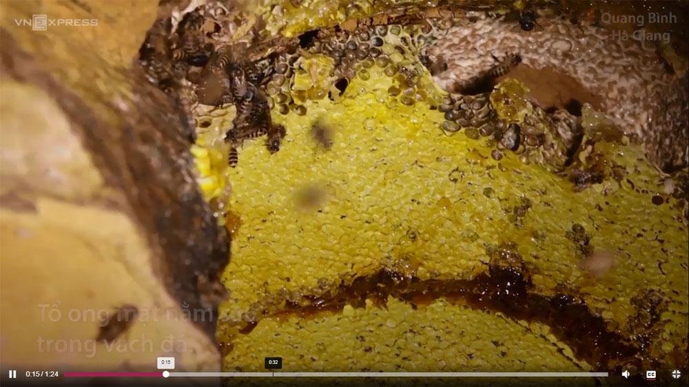 Nông dân vượt núi, đào hang lấy mật ong rừng ở Hà Giang