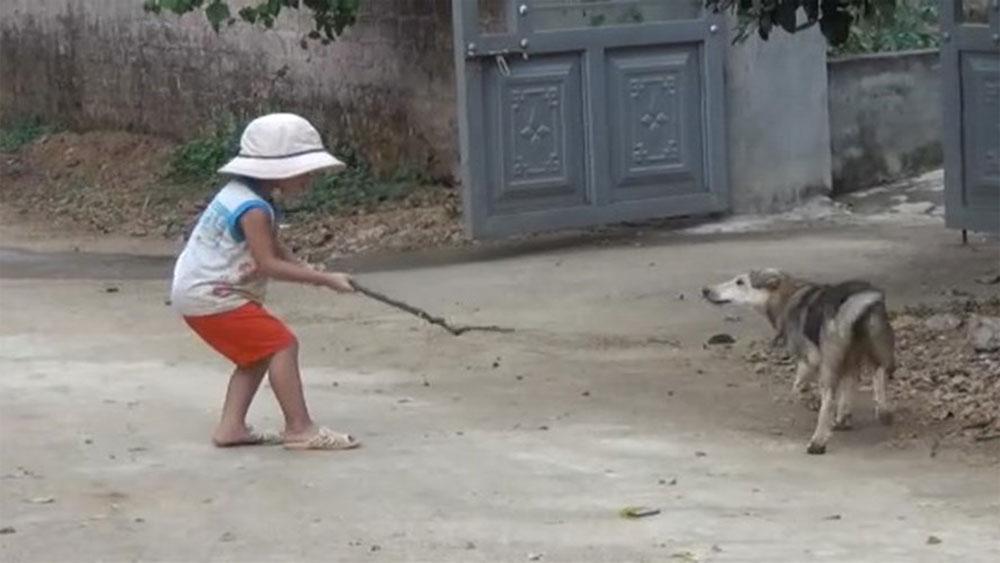Bé 4 tuổi bị chó nhà chưa tiêm phòng tấn công