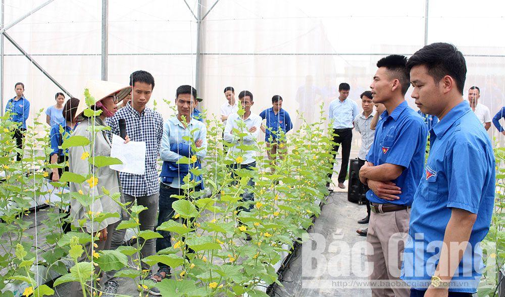 Đoàn viên, thanh niên Bắc Giang, Hợp tác xã rau sạch Yên Dũng, Xã Tiến Dũng