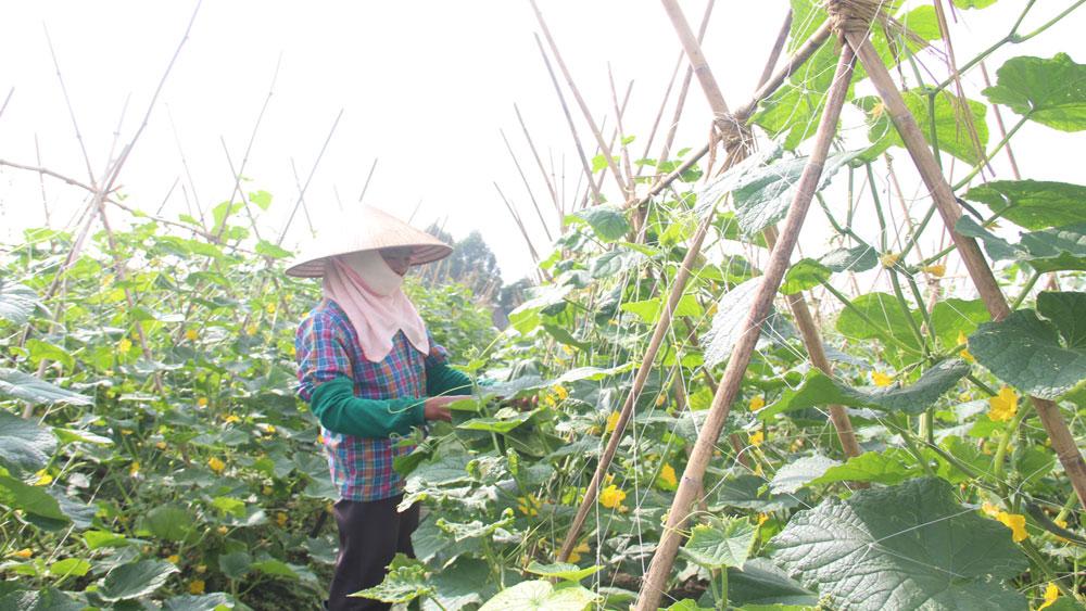Bắc Giang, HTX, Liên hiệp HTX nông nghiệp, hợp tác xã