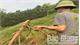 Bắc Giang, tự ý chặt phá cây trồng vì mâu thuẫn đất đai