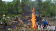 Nguy cơ cao cháy rừng tại Bắc Giang do nắng nóng